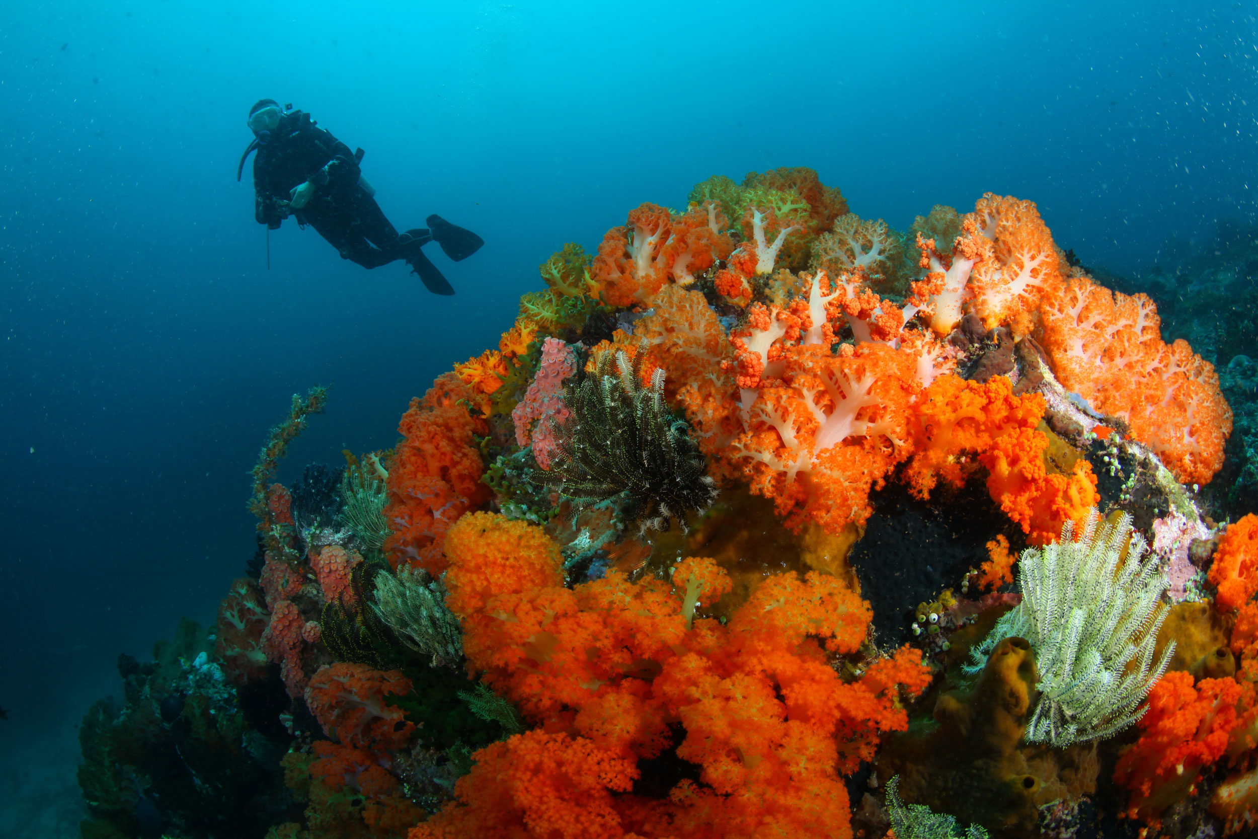 Soft Corals Batu Sahaung, Photo: Maria and Ola (September 2019)